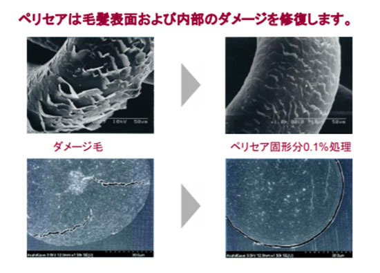 ペリセアの補修効果実験(結果写真)