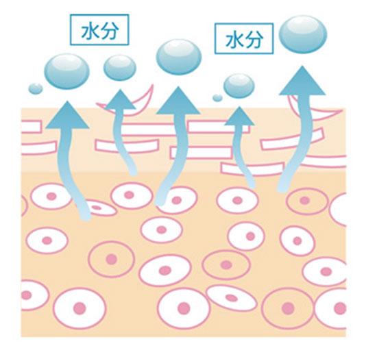 肌が乾燥する仕組み(イメージ)
