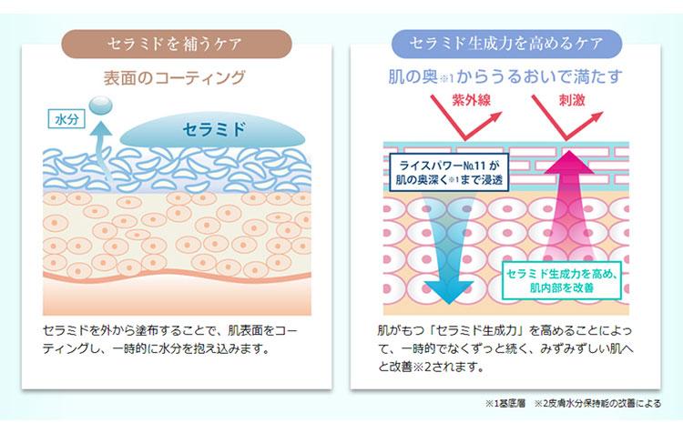 ライースリペアがセラミドを生成する仕組み(イメージ)