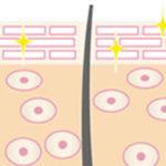 ライースリペアがハリ肌に導く仕組み(イメージ図)1