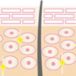 ライースリペアがハリ肌に導く仕組み(イメージ図)2