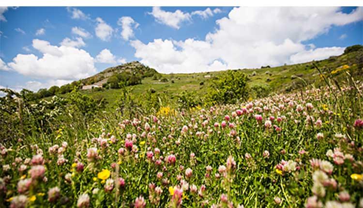 Melvita(メルヴィータ)自然保護のイメージ画像